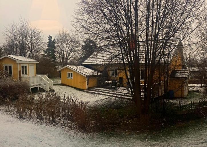Outside my window in the suburbs
