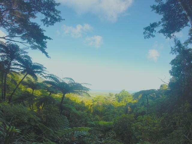 Daintree viewpoint