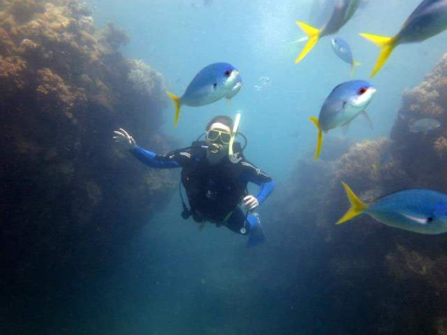 Diving Whitsundays