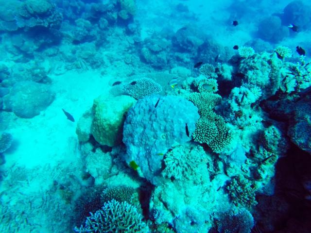 Norman reef